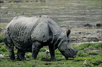 Photo tour Rhinos Kaziranga National Park